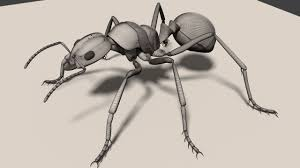 3d model fire ant cgtrader