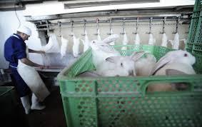 gabbie per conigli nani usate consigli per vivere felici con i conigli la terrazza di michelangelo