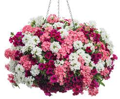 flower baskets hanging baskets 5 secrets the pros use the garden glove