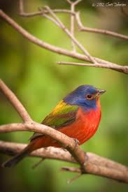 557 best birds images on pinterest beautiful birds animals and