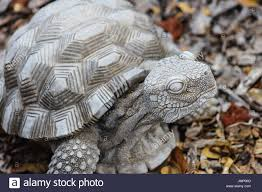 turtle garden stock photos turtle garden stock images alamy