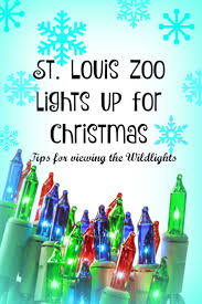 Zoo Lights Boston by 113 Best St Louis For Kids Images On Pinterest St Louis To
