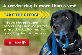 fake service dogs u2013 spot speaks