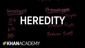introduction to heredity youtube
