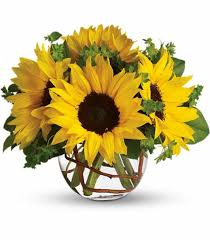 sunflower delivery sunflowers jpg