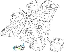 coloring pages flowers and