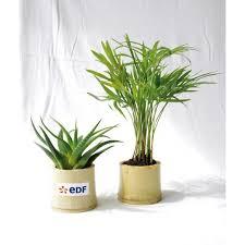 plante d駱olluante bureau les 46 meilleures images du tableau plantes personnalisables sur