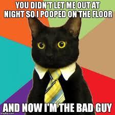 I Pooped Today Meme - business cat meme imgflip