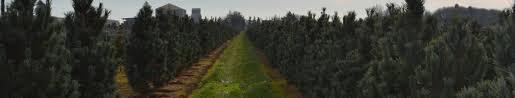about premier trees llc premier trees