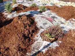 lawn removal do it right the real dirt blog anr blogs