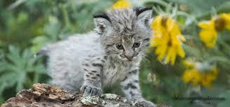 Montana wildlife tours images Animals of montana inc young at heart baby animal tour jpg