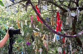 wishing tree the magic of the wishing tree at madron