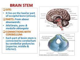 Brain Stem Anatomy Brain Stem External Features Ppt Video Online Download