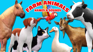 farm animals song for children learn domestic animals names