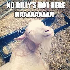 Billy Goat Meme - stoner goat weknowmemes