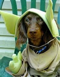 Star Wars Dog Halloween Costumes 30 Halloween Dog Costumes Put Smile Face