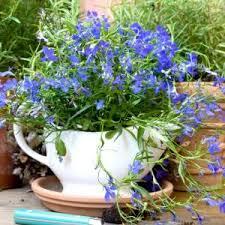 Summer Flower Garden Ideas - summer flowers archives on sutton place