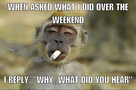 Baboon Meme - weekend humor with pictures aol image search results