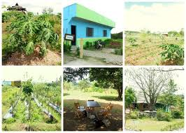 gk houses gawad kalinga enchanted farm in angat bulacan flavours of