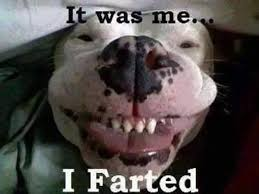 It Was Me Meme - it was me i farted dog memes and comics