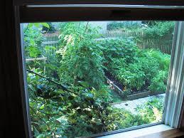 skippy u0027s vegetable garden august 2006
