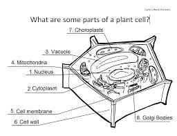 printable plant cell diagram photo album spyally dragrams