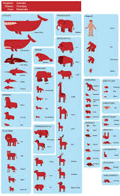 best 25 taxonomy biology ideas on pinterest scientific name for