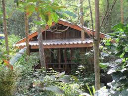 monkey mansion bungalows khao sok thailand booking com