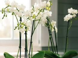 plantes bureau leçon de déco quelle plante pour mon bureau décoration