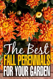 the best fall perennials for your garden perennials autumn and