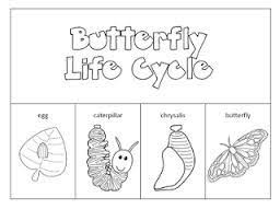53 best butterflies images on pinterest butterfly life cycle
