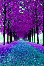 árboles morados purple trees also travel on a budget feel free