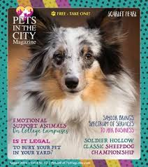 Burying Your Dog In The Backyard Legality Pets In The City Magazine Issuu