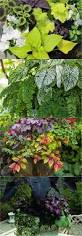 Shade Garden Vegetables by Best 25 Foliage Plants Ideas On Pinterest Shade Garden Plants