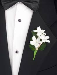stephanotis flower 18 best stephanotis wedding accents images on flowers