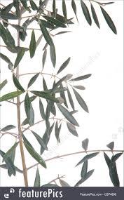 olive tree branch photo