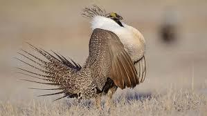 Utah Wildlife Tours images Utah and arizona birdwatching tour jpg