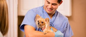 Job Description Of A Phlebotomist On Resume by Veterinary Technician Job Description And Duties What You U0027ll Do