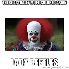 Chinese Lady Meme - multicolored memes image memes at relatably com