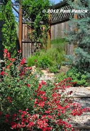 Texas Landscape Plants by 171 Best An English Garden In Texas Images On Pinterest Flower