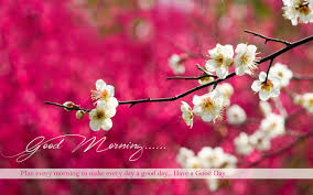 widescreen beautiful morning images on gd wishes nature in