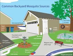 mosquitoes msmvcd marin sonoma mosquito u0026 vector control