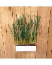 Hanging Indoor Planter by Spring Savings On Modern Rectangular Hanging Indoor Outdoor Metal