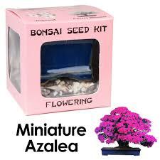 amazon com eve u0027s miniature azalea bonsai seed kit flowering