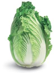 cabbage china cabbage or wong bok