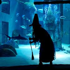 london aquarium tickets largest and best aquariums in europe