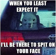 Alpaca Meme - evil alpaca meme on imgur