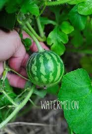 Benefits Of Urban Gardening - 13 benefits of raised urban gardening hometalk