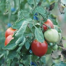 vegetable garden planning for beginners great resource auntie