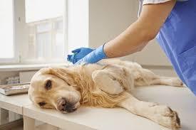 managing veterinary costs avoiding economic euthanasia